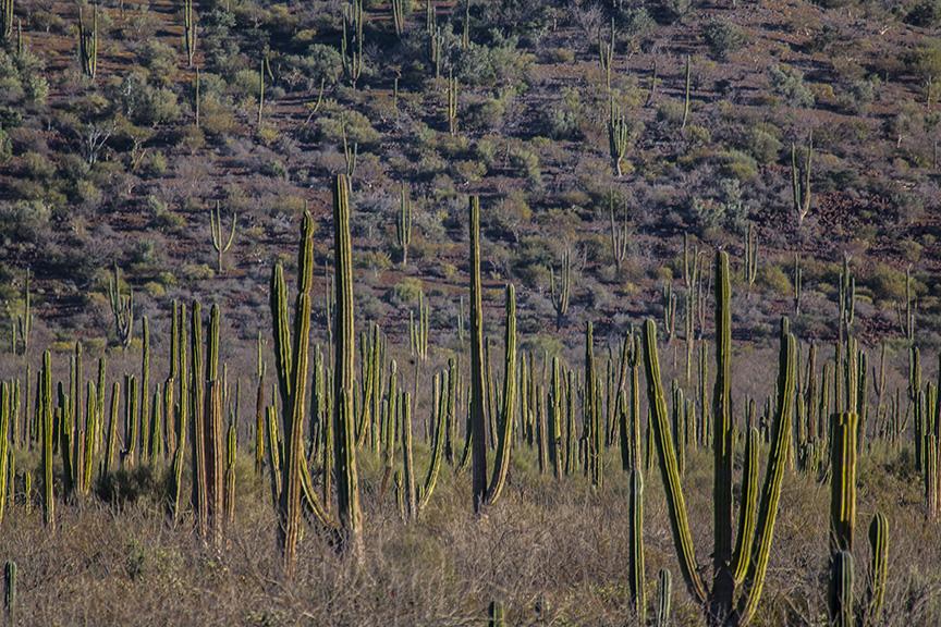 Cactus_0062