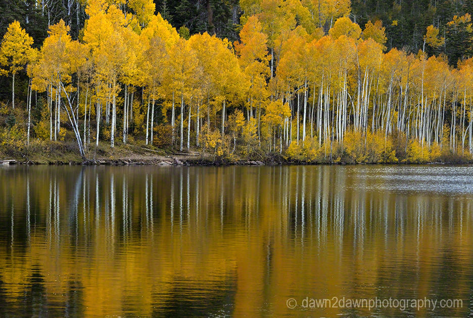 Kolob Autumn Reflection