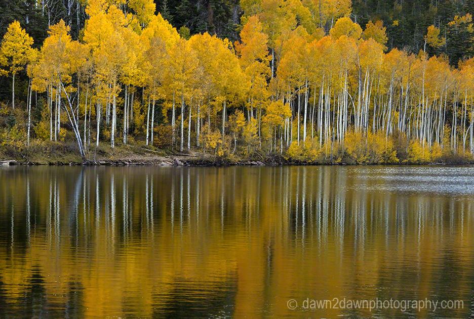 Kolob Autumn Reflection