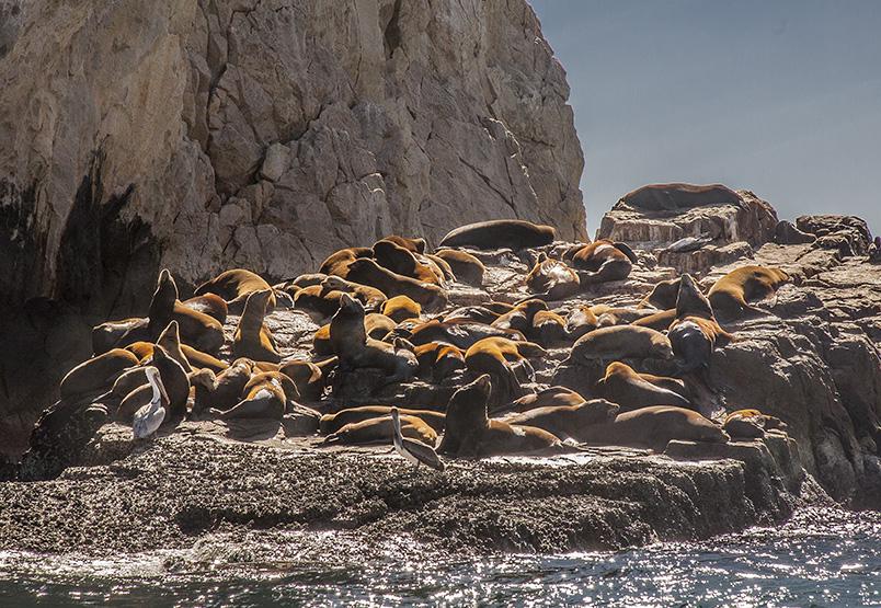 _Seals_9711