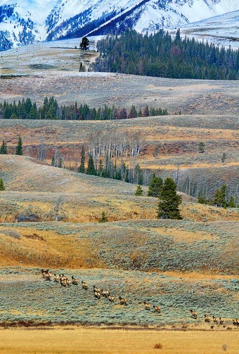 Elk heard heading to higher ground.