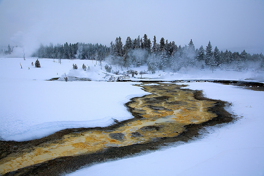 Hot water from a nearby geyser penetrates the winter scene at Yellowstone