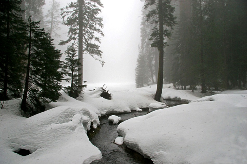 Quiet winter scene at Sequoia National Park