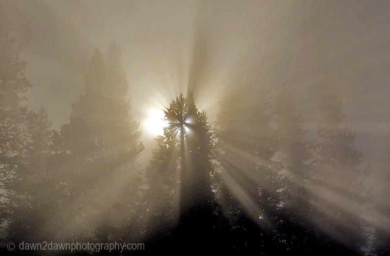 A rising sun struggles to penetrate the morning fog.
