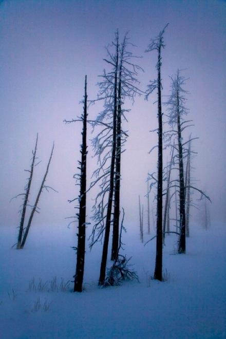 DEAD TREES ALIVE