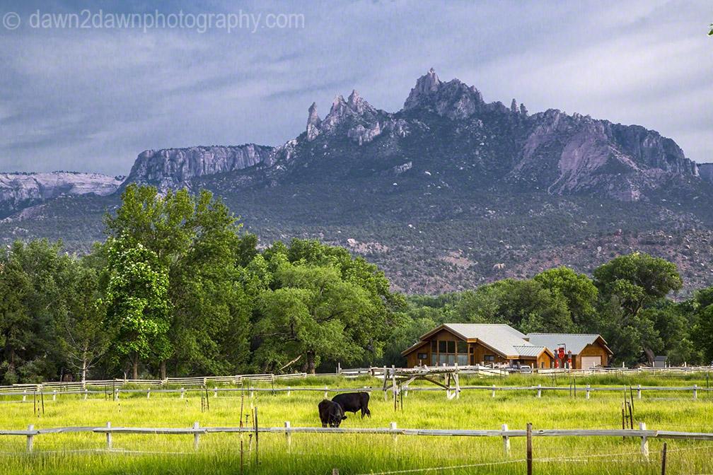 Springdale Pasture_0311