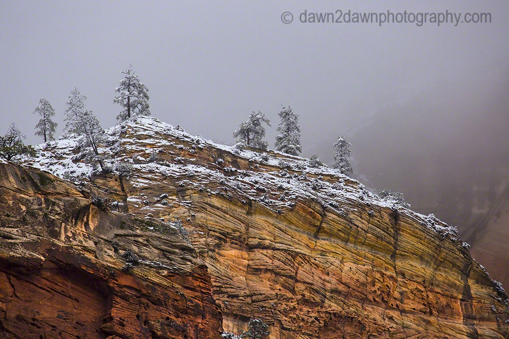 Zion Winter