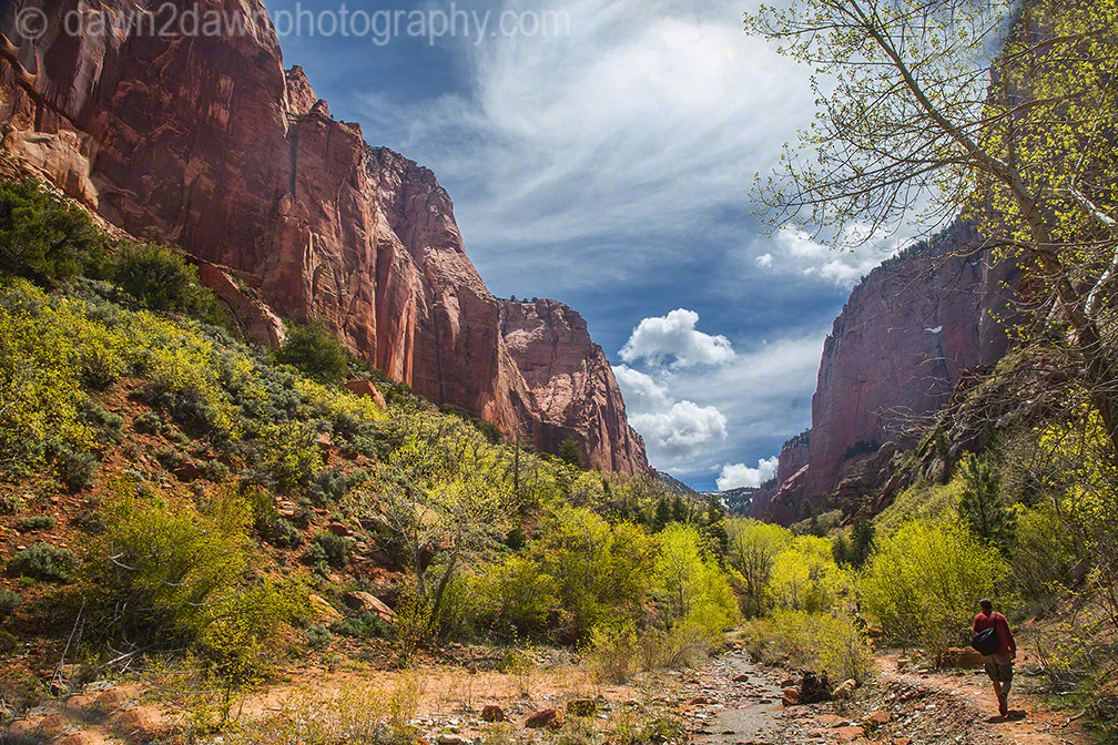 Zion's Taylor Creek