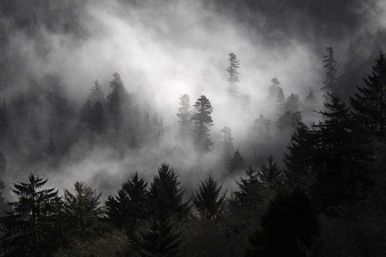 FOGGY OREGON FOREST