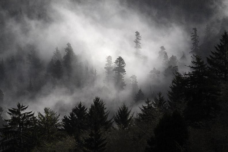 FOGGY OREGON FOREST