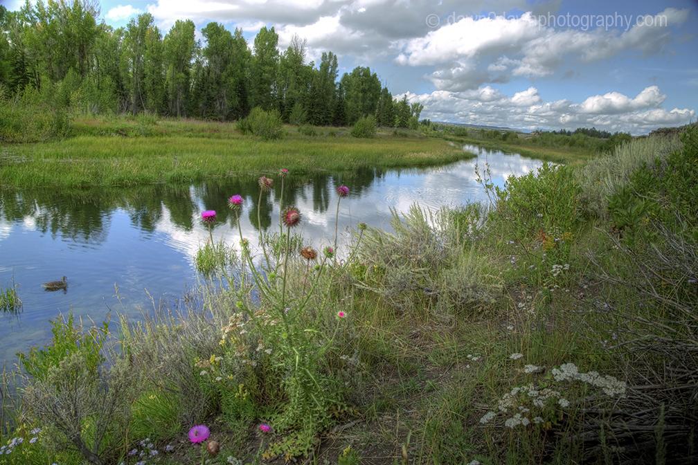 Teton Pond_8795