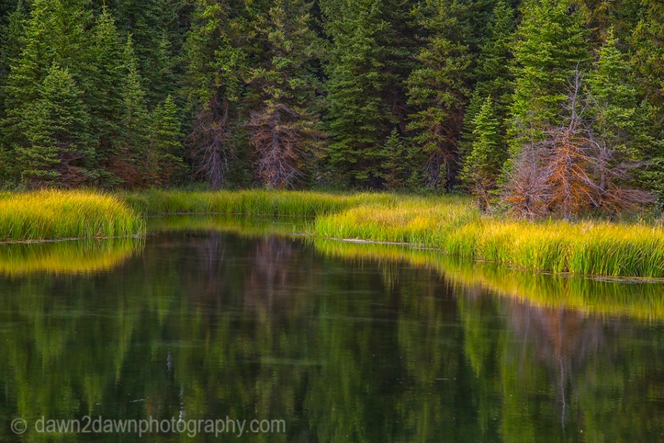 Teton Pond Reflection