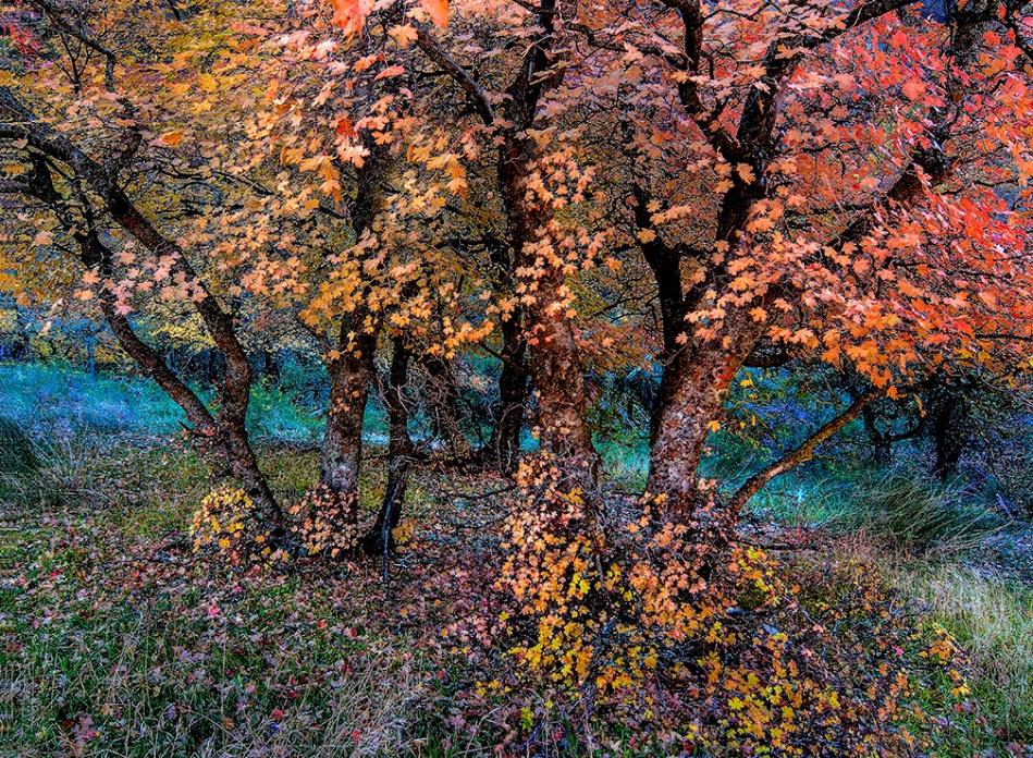 Zion's Fall Color