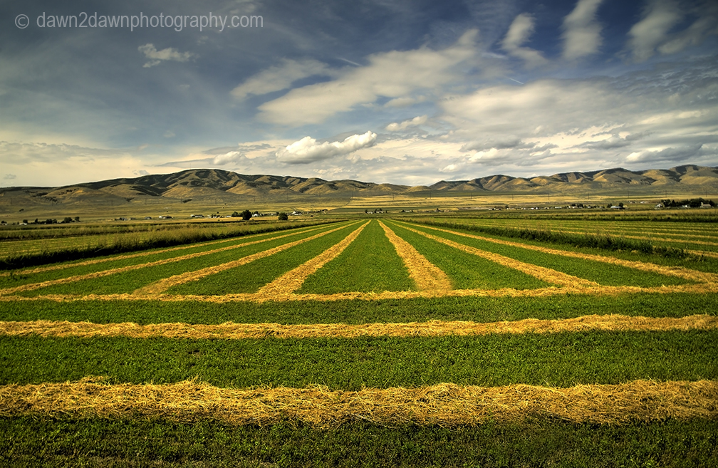 Utah Farm