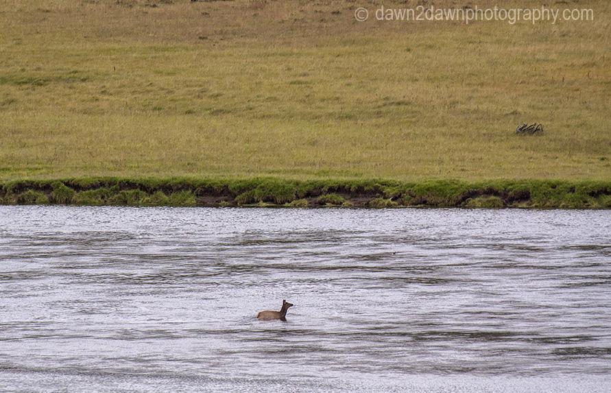 YNP Elk River_2285