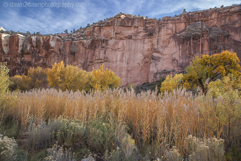 Capital Reef Fall