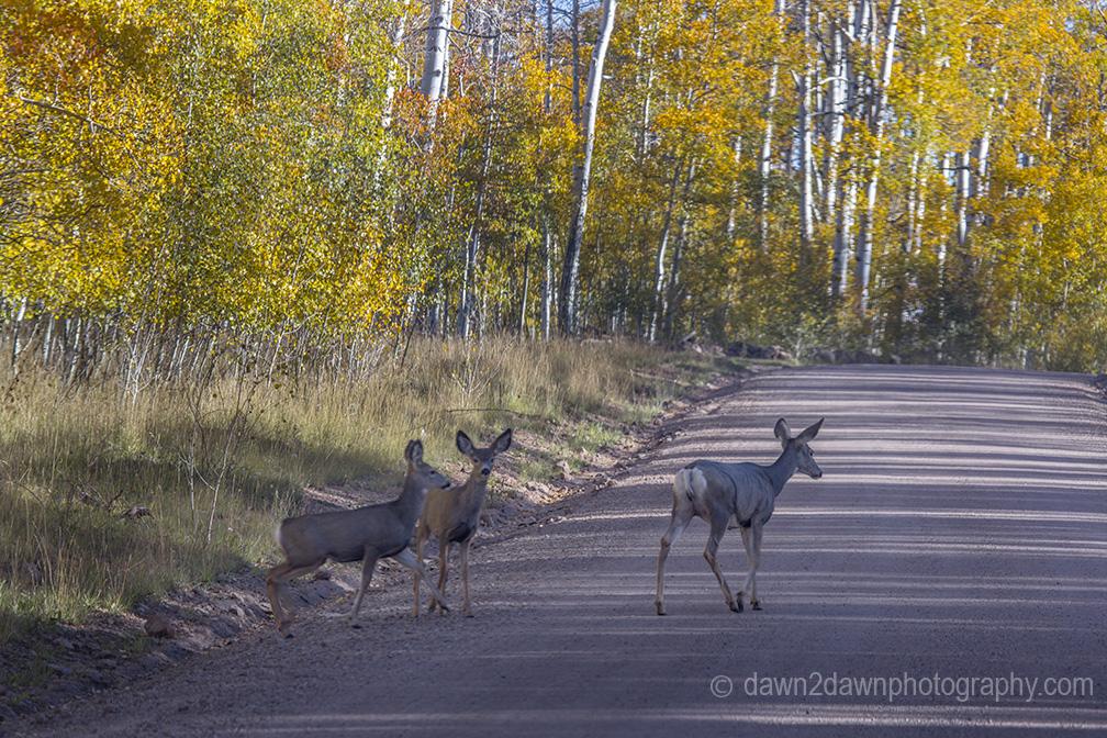 Utah Fall Deer_2100