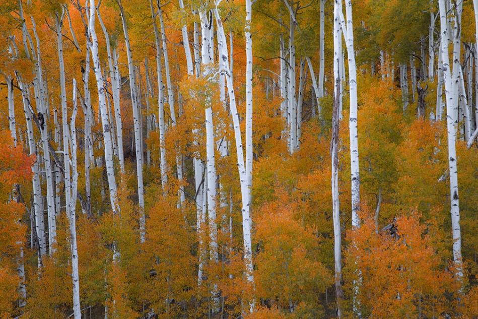 Utah Fall single_2788