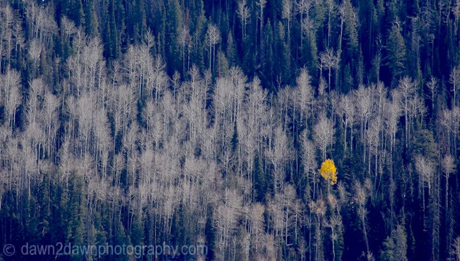 One Last Aspen