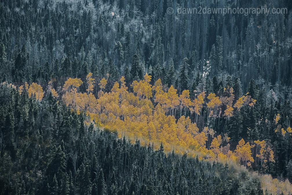 Utah Autumn