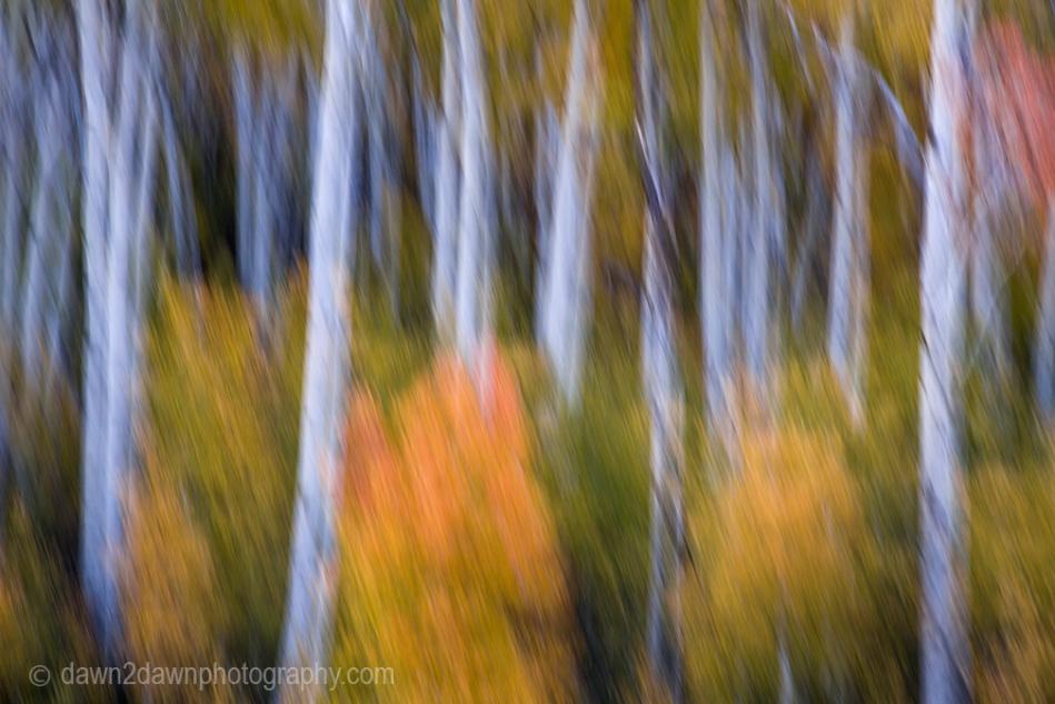 Utah Fall_2797