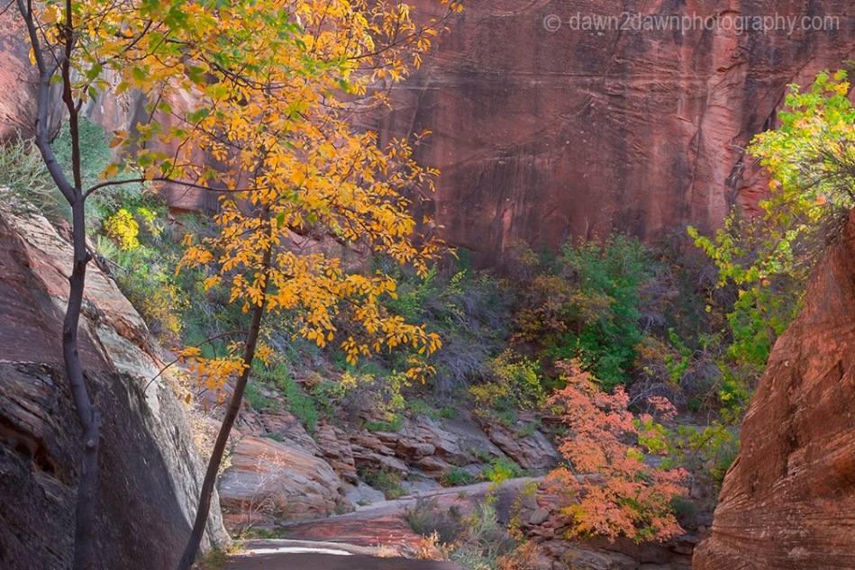 Zion's Echo Canyon Fall