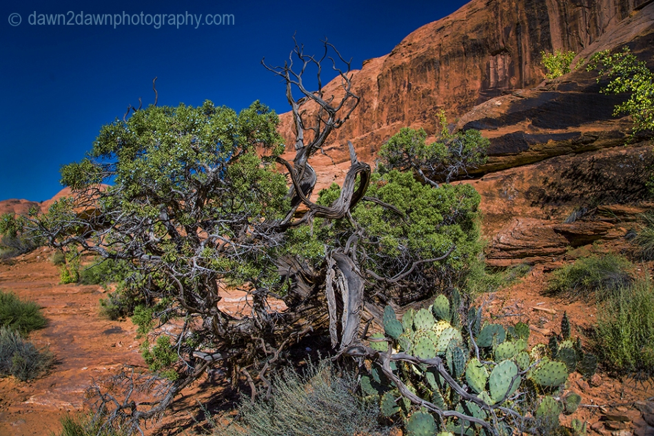 Desert Vegeatation