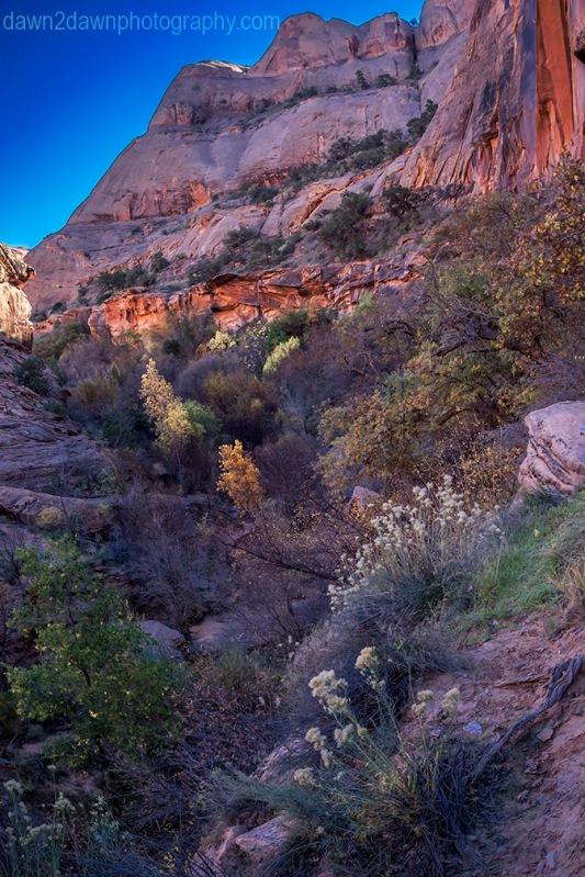 Moab Negro Bill Canyon