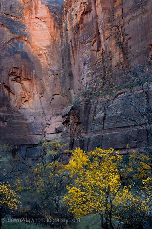 Zion Canyon Autumn