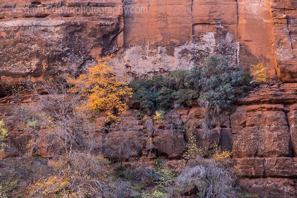 Zion Big Bend Autumn