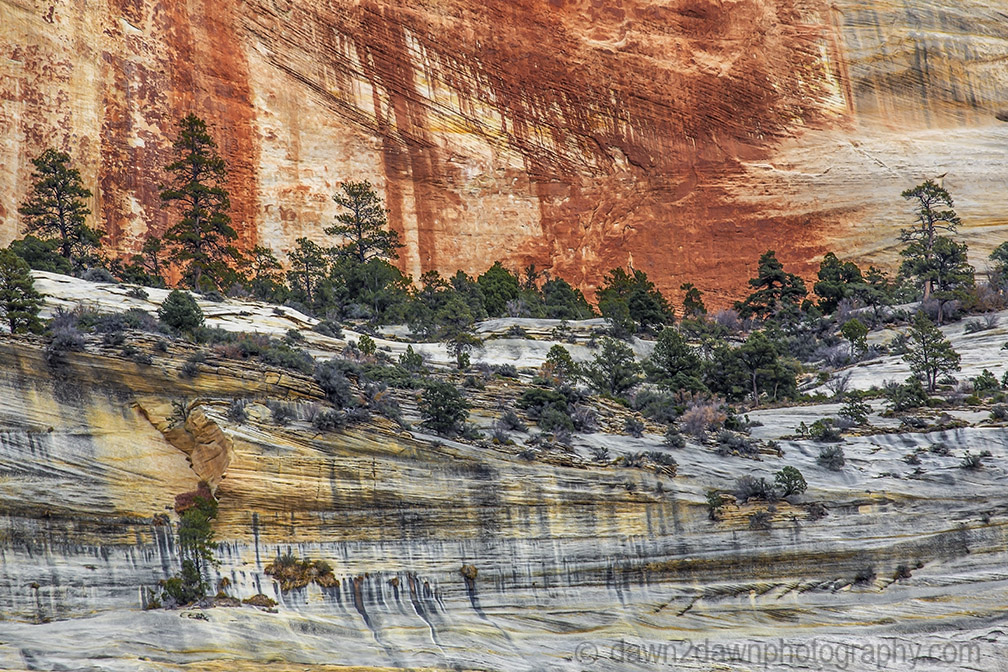 Zion's Colorful Sandstone Walls