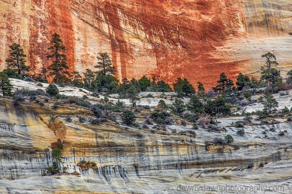 Zion's Colorful Sandstone Walls