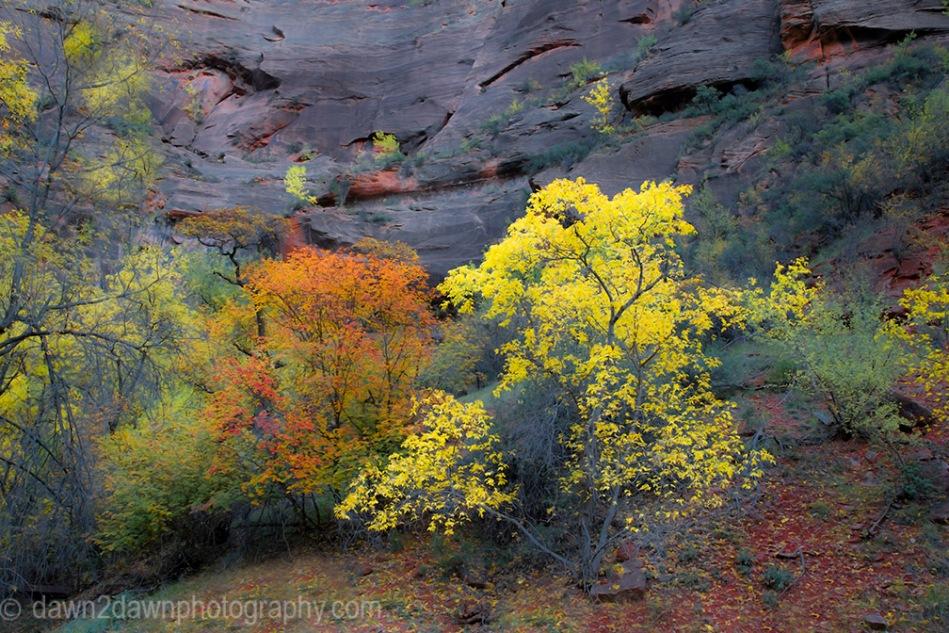 Zion Autumn
