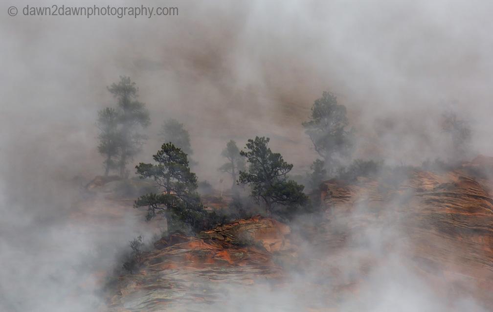 Zion Canyon Fog_8924
