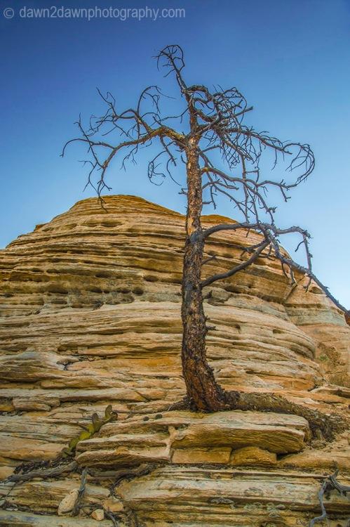 Zion Dead Tree