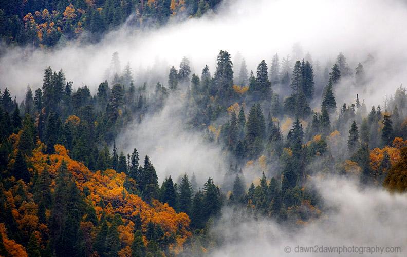 FOG ROLLS THROUGH A FOREST