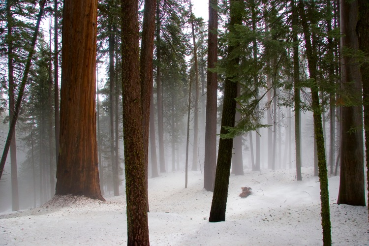Giant Forest_0066