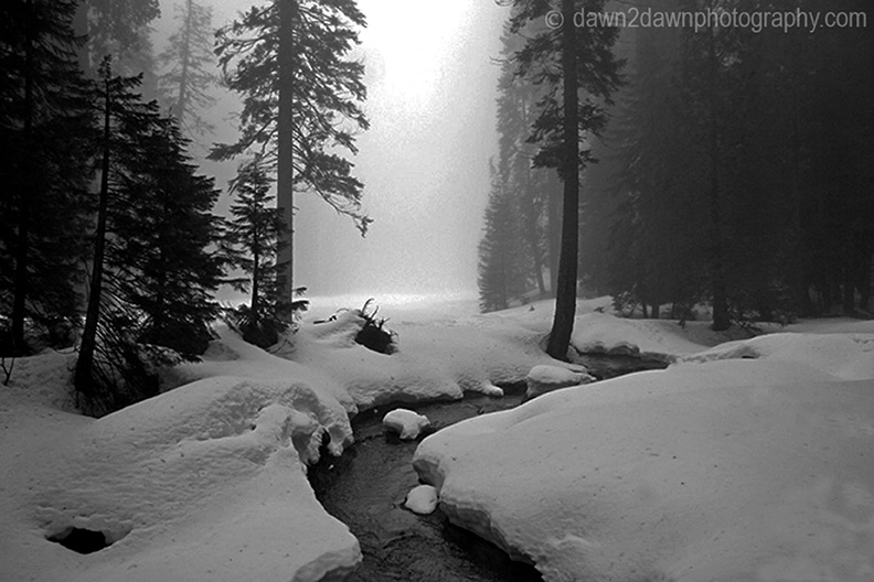 Sequoia's Giant Forest BW_0073