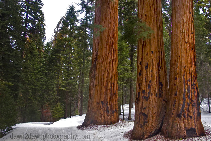 Sequoia National Park- A Park Of Extremes