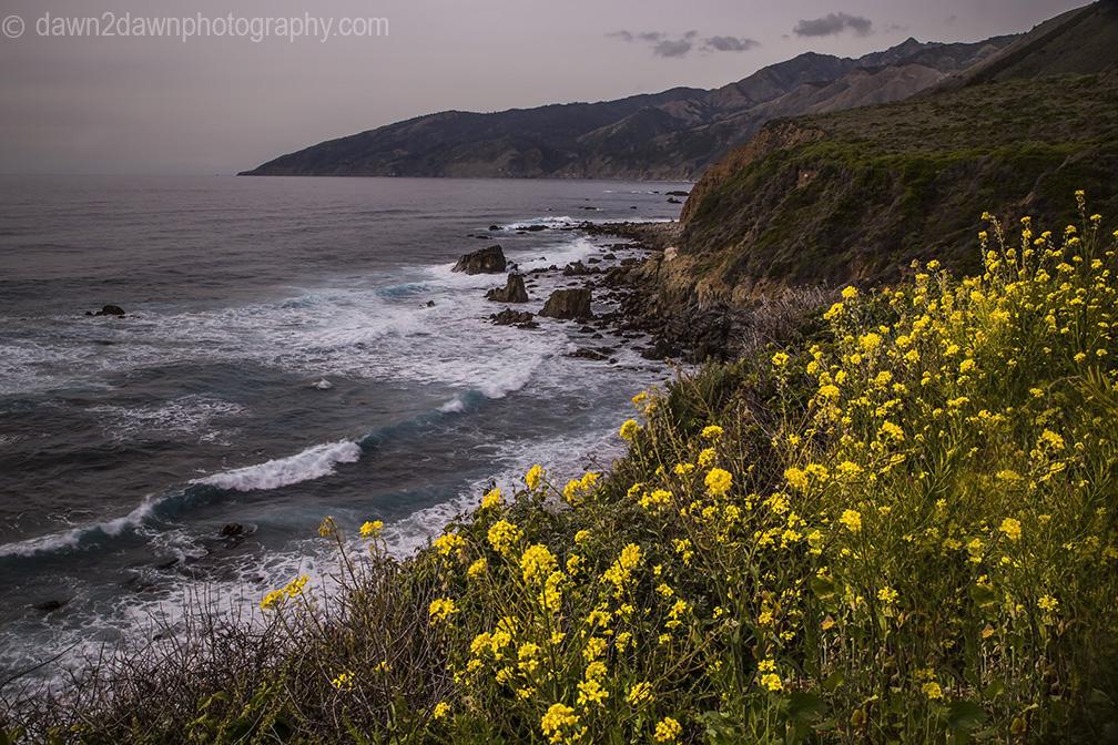 Calofornia Coast Flora