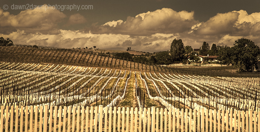 Paso Robles Winery