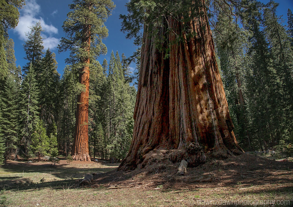 Sequoia's Giant Forest