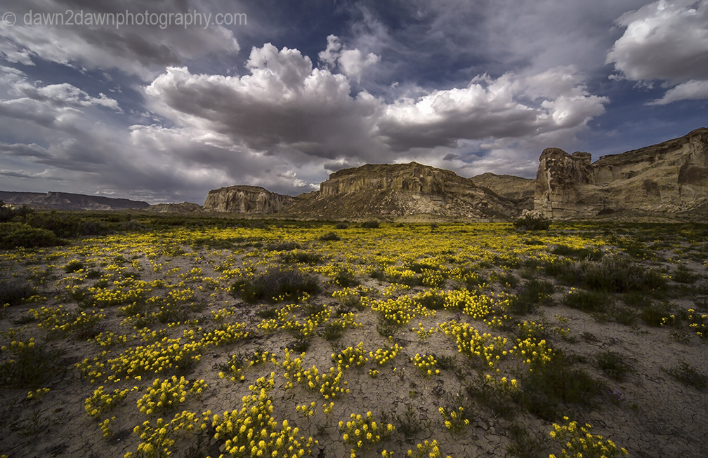 Wildflowers come alive during spring at Wahweap Creek near Big Water, Utah