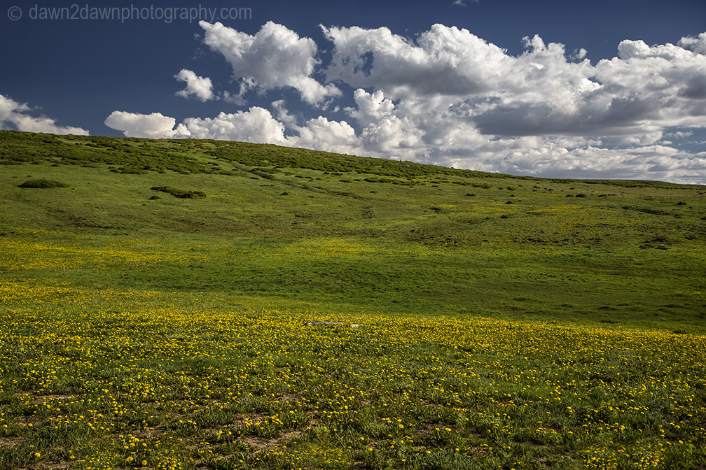 Wildflowers bloom in the pastures above Kolob terrace near Zion National Park, Utah