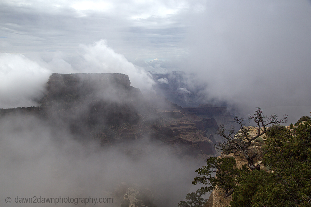 GC North Rim Cape Royal Fog_8612