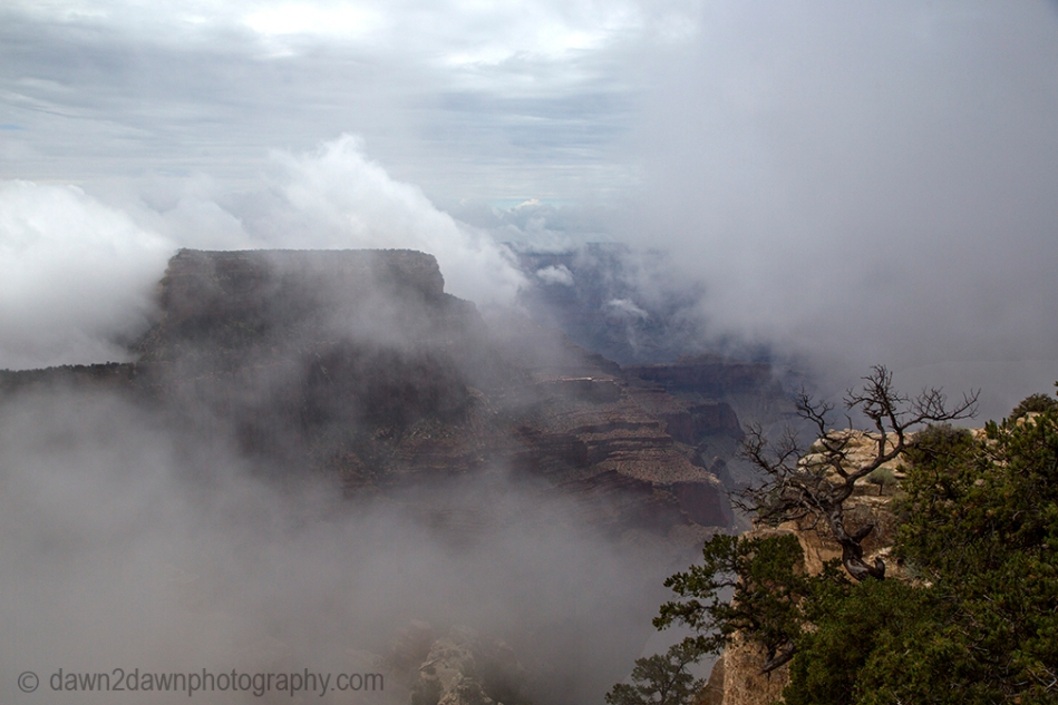 GC North Rim Cape Royal Fog_8612