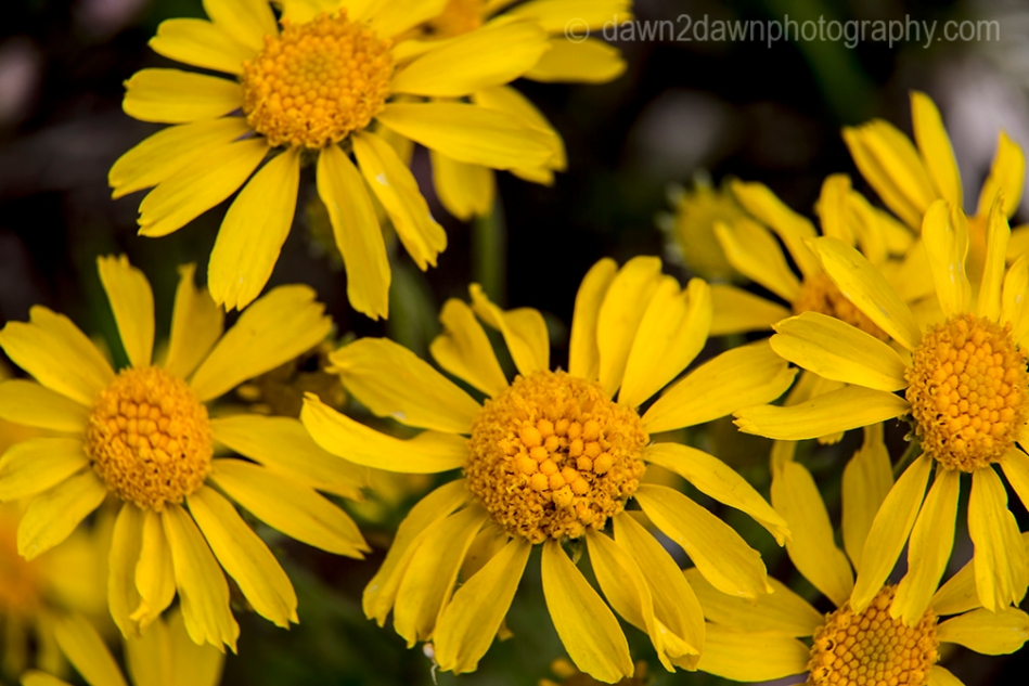 Wildflowers thrive in the summer at Kaibab National Forest, Arizona
