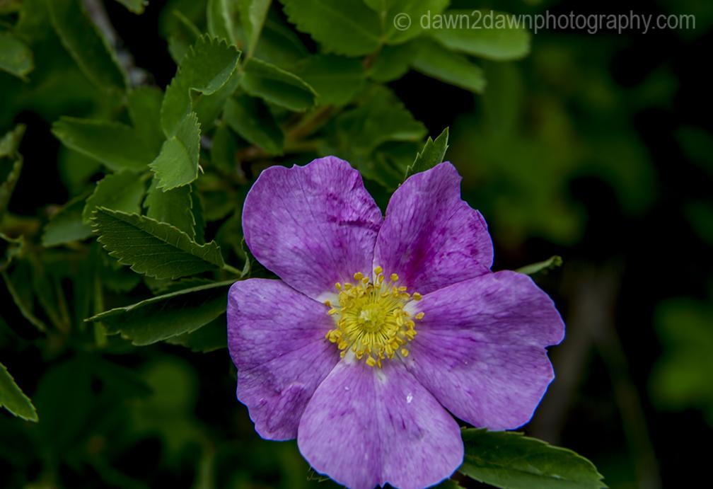 GC North Rim Flowers_8044
