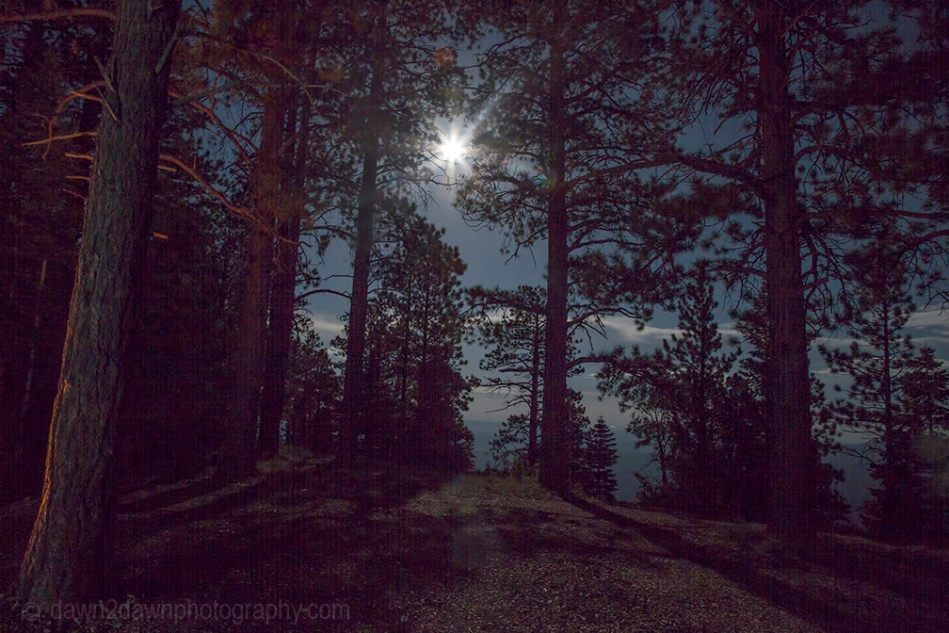 A full moon brightens up the Kaibab National Forest in Northern Arizona