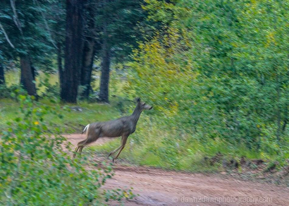 GC Pt Sublime Deer_0820